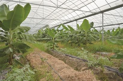 植物营养组织结构图手绘图